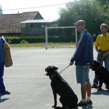 Demonstratie de dresaj canin